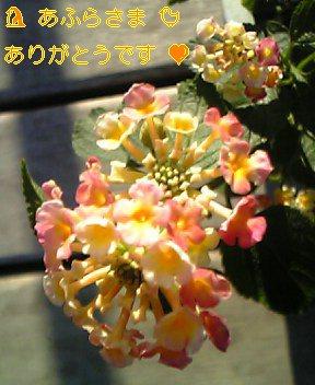 トンビちゃん お花は よこどりしないでねぇ (*^^*)
